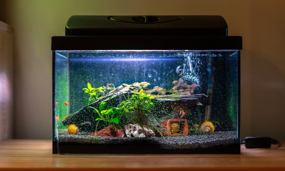 Add an aquarium for a bit of extra zen