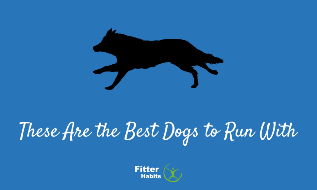 These are the best dogs to go running with